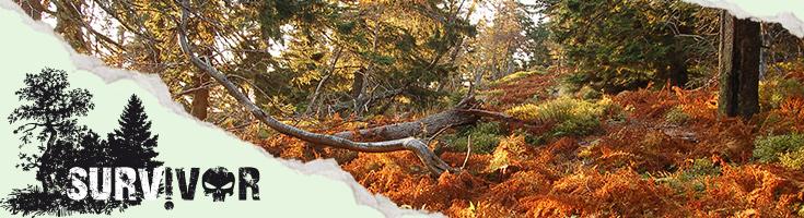 Zálesáctvo, prežitie v prírode a staroživot