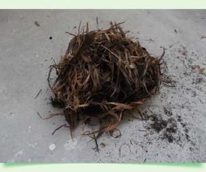 bowdrill hniezdo
