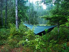 Hamaka v lese