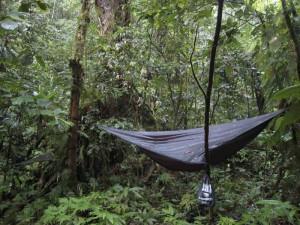 hamaka v lese 2