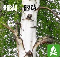 BrezaMAIN