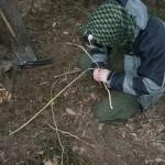 Polenie smrekových koreňov 2