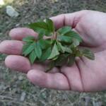 rastlinky a polievka 027