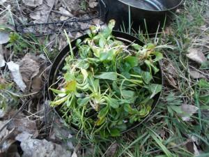 rastlinky a polievka 029