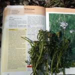 rastlinky a polievka 040
