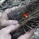 zalesactvo-Bowdrill-uhlik-v-hniezde-zo-suchej-travy