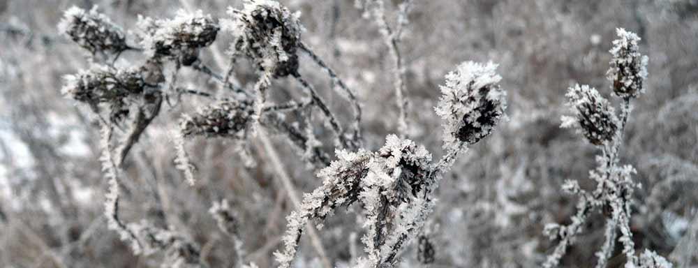 Spánok-v-mraze-Krásna-zima