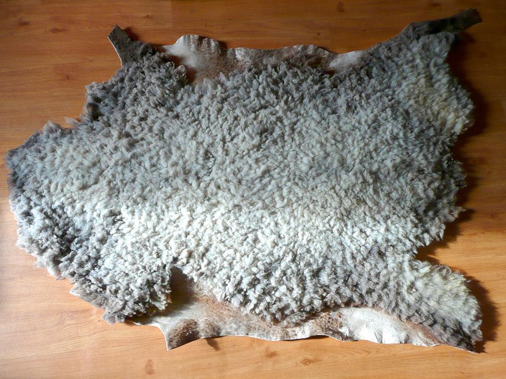 Spracovanie ovcej koze v domacich podmienkach (3)