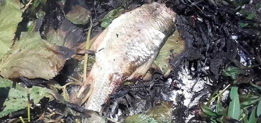 zalesactvo-Ryba-varená-v-listoch