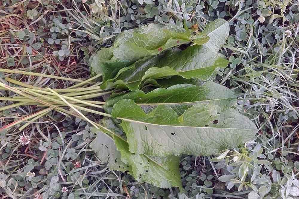 ochutnavka-horkych-rastlin-1