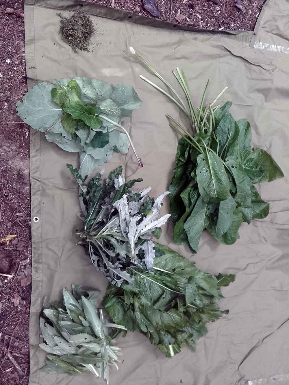 ochutnavka-horkych-rastlin-13