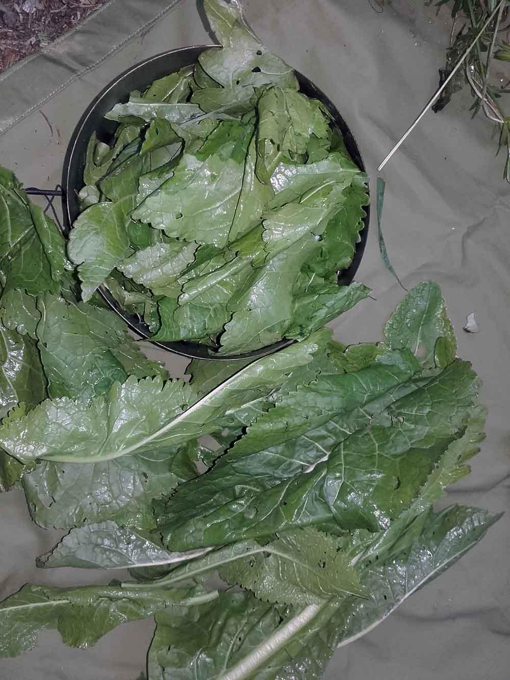 ochutnavka-horkych-rastlin-2