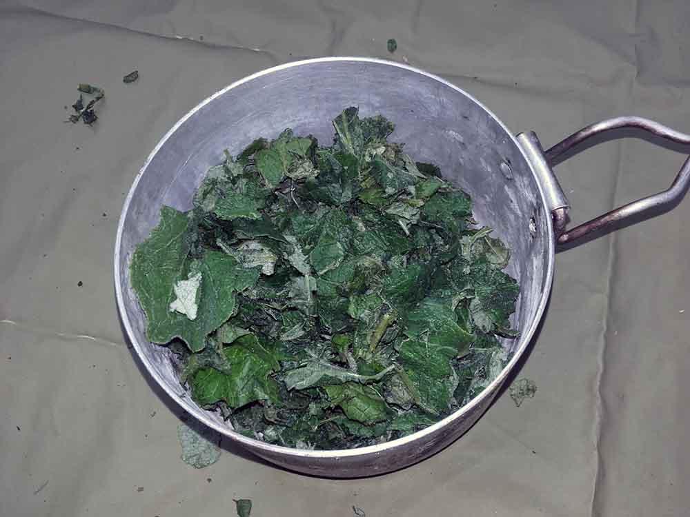 ochutnavka-horkych-rastlin-6